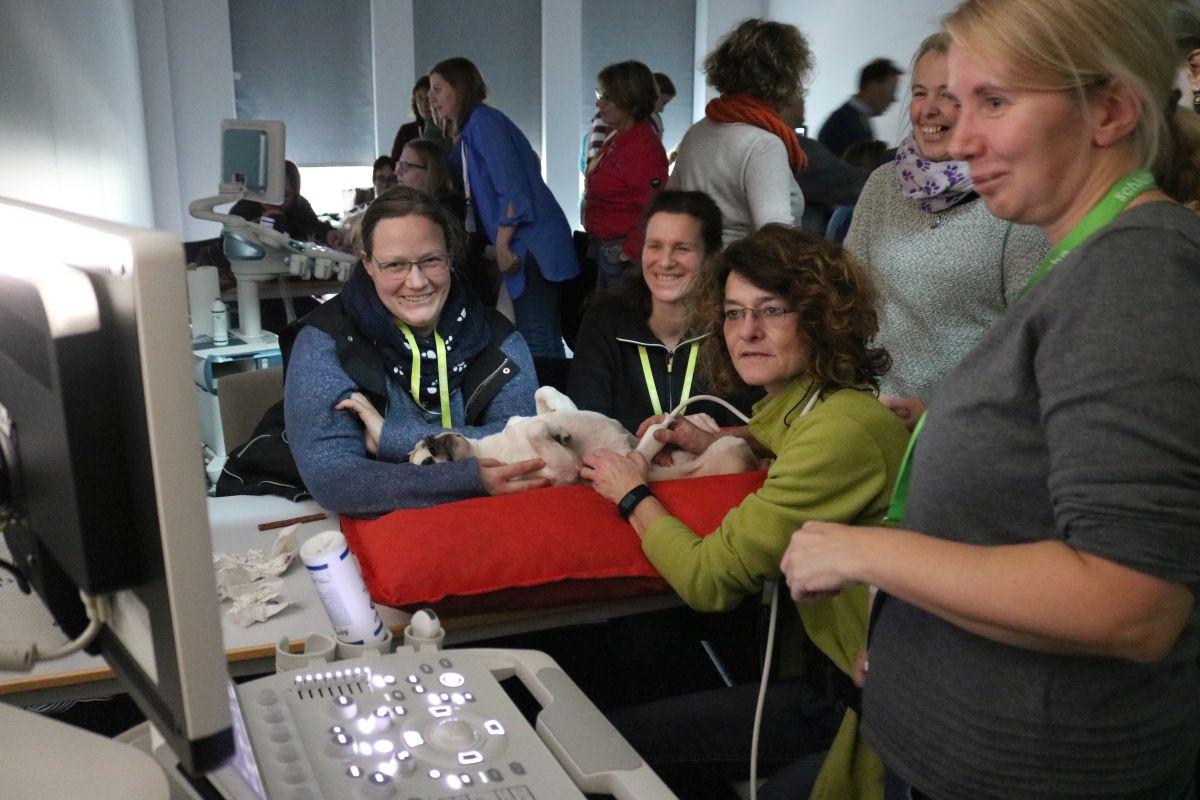 Praktische Übung auf dem Niedersächsischen Tierärztetag: Ultraschall beim Hund